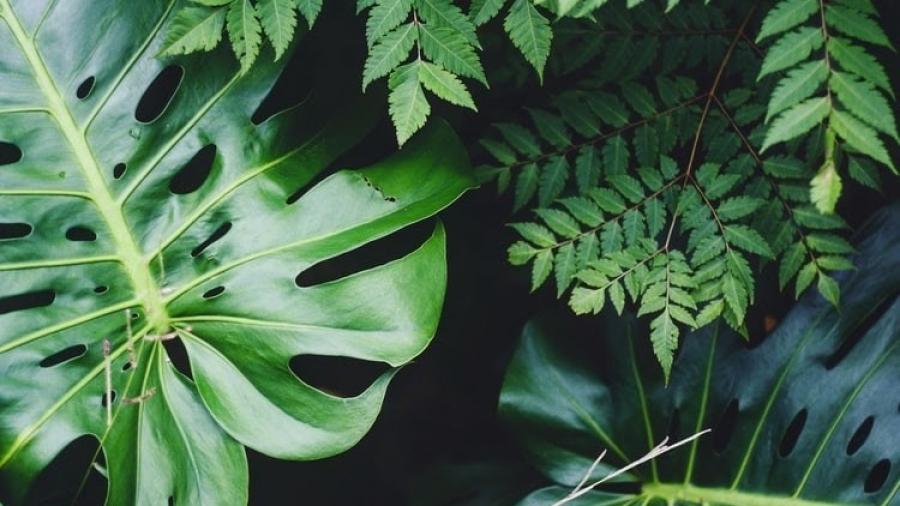 plantaa